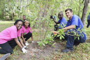 people planting tree together freeuse