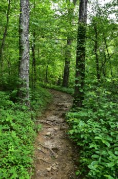 Alum Cove Trail Fine Art Photography From The Ozarks