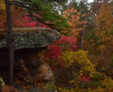 Autumn Bluff on Pedestal Rock Trail Fine Art Photography Print From The Ozarks